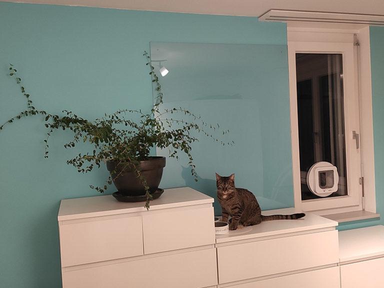 Kunststoffplatten als Wandschutz für Haustiere einsetzen